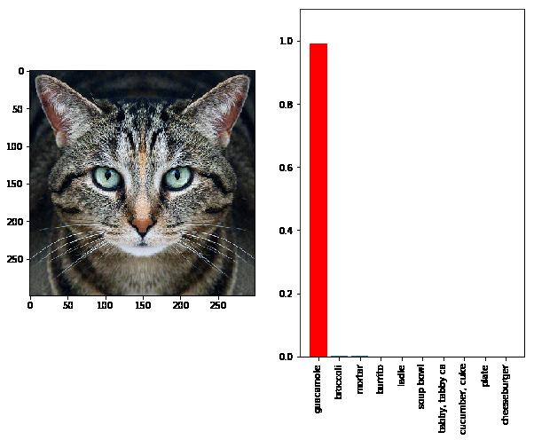 cat_adversarial